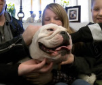 A True Love Bulldog Story.. I can't Believe What this Guy Built for His Dog!